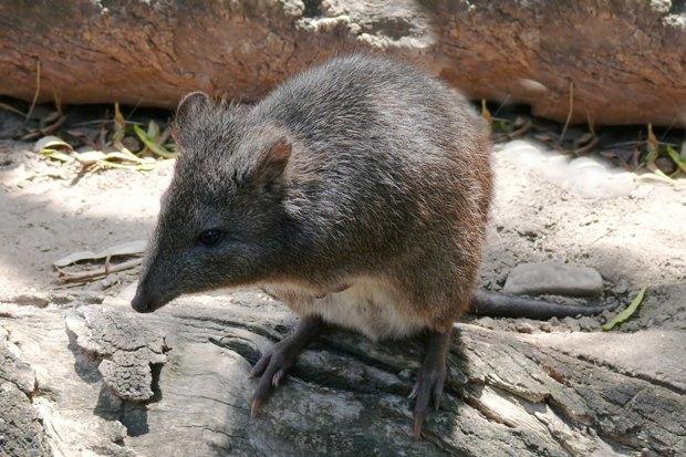 Как учёные находят новых животных: 8 недавно открытых видов. Изображение № 6.