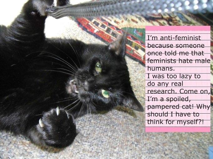 В новом тумблоге кошки борются с феминизмом  (на самом деле нет). Изображение № 3.