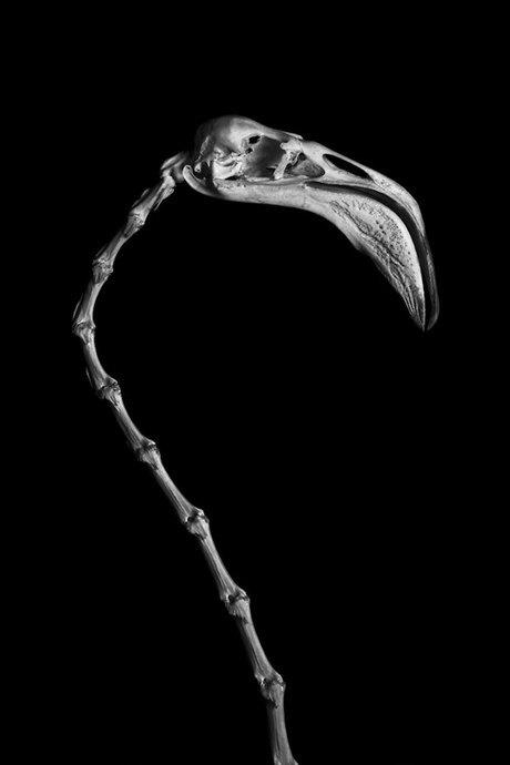 Белое на чёрном: Скелеты животных в фотоальбоме «Evolution» . Изображение № 12.