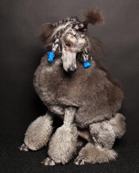 «Стриженые»: Собаки как арт-объект. Изображение № 11.