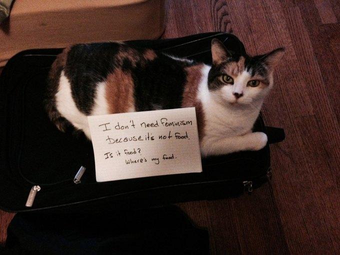 В новом тумблоге кошки борются с феминизмом  (на самом деле нет). Изображение № 5.