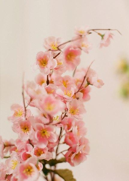 Круизная коллекция Balenciaga в съёмке SVMoscow. Изображение № 7.
