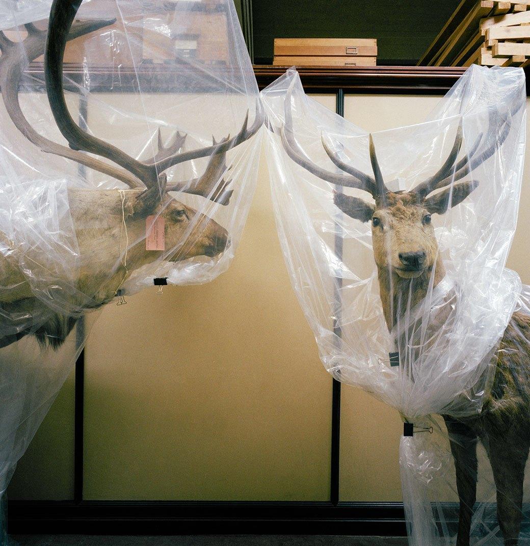 «Museology»:  Тайная жизнь  музейных экспонатов. Изображение № 5.