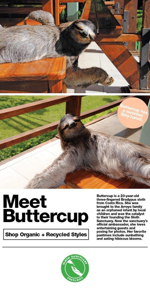 Лицом American Apparel стал трехпалый ленивец. Изображение № 1.