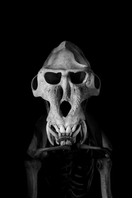 Белое на чёрном: Скелеты животных в фотоальбоме «Evolution» . Изображение № 11.