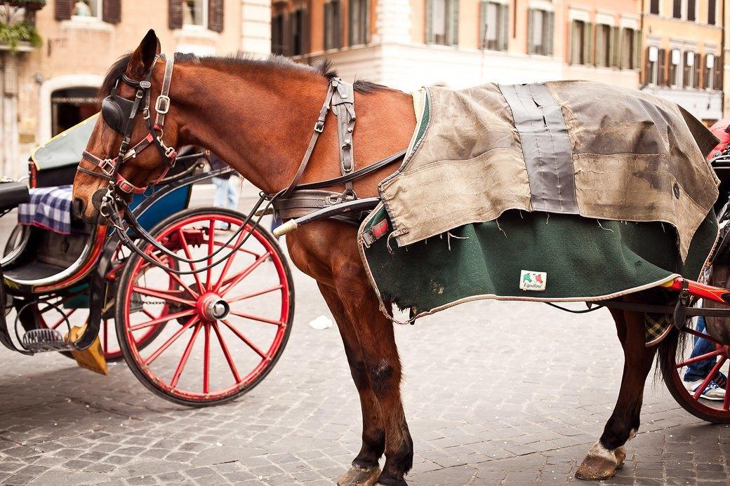Люди на улицах Рима. Изображение № 13.