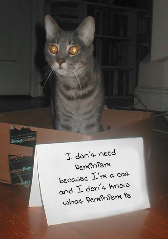 В новом тумблоге кошки борются с феминизмом  (на самом деле нет). Изображение № 1.