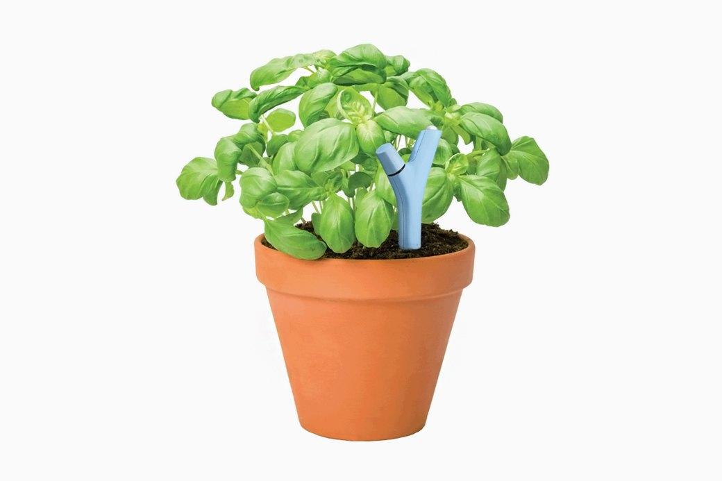Датчик Parrot Flower Power для ухода за растениями. Изображение № 2.