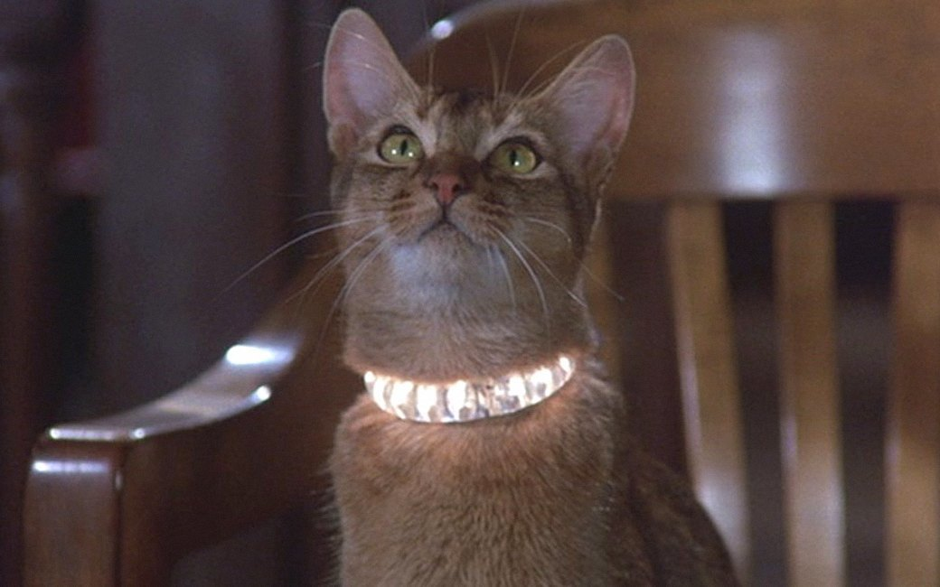Наглая морда: Лучшие рыжие  коты в кино . Изображение № 11.