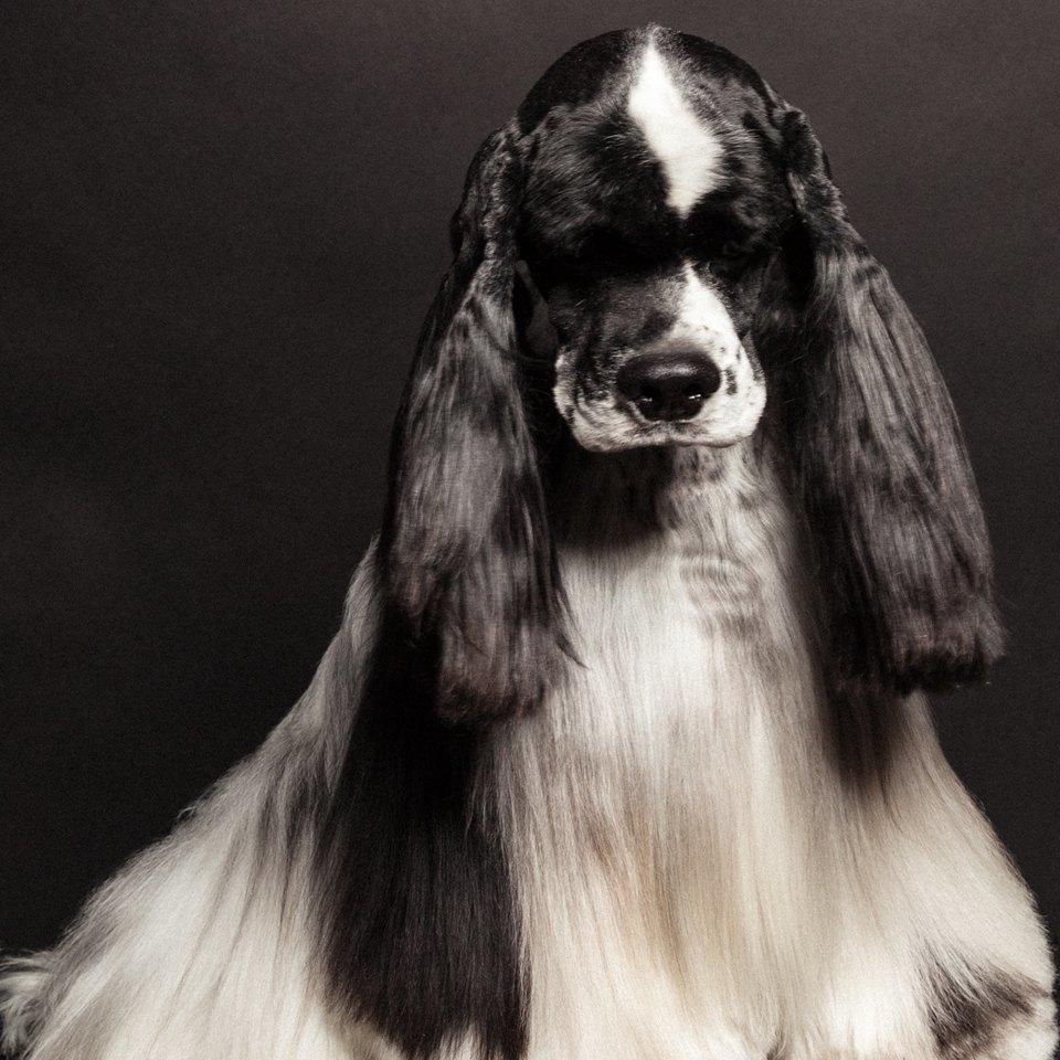 «Стриженые»: Собаки как арт-объект. Изображение № 8.