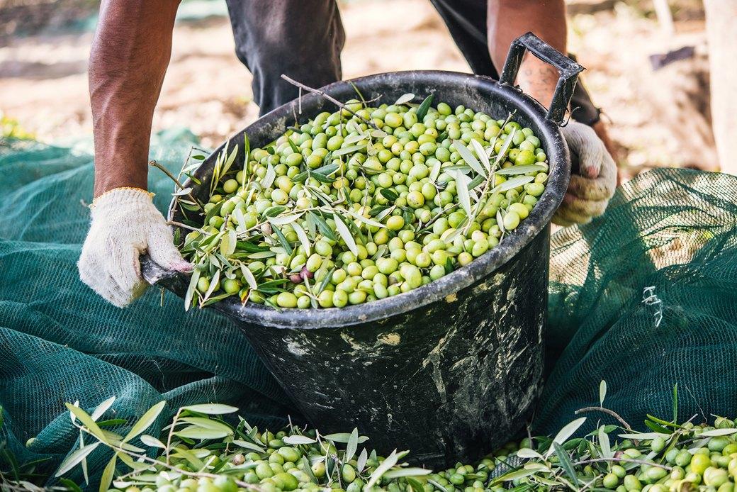 Осень в Италии:  Гастротуризм и сбор  олив на Сицилии. Изображение № 12.