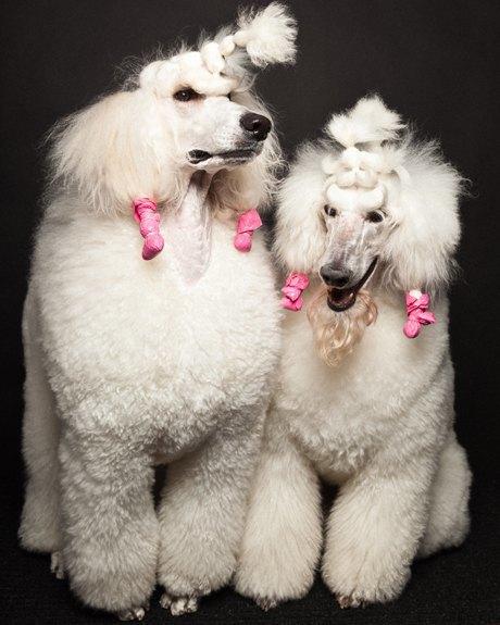 «Стриженые»: Собаки как арт-объект. Изображение № 10.