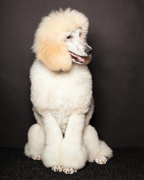 «Стриженые»: Собаки как арт-объект. Изображение № 9.