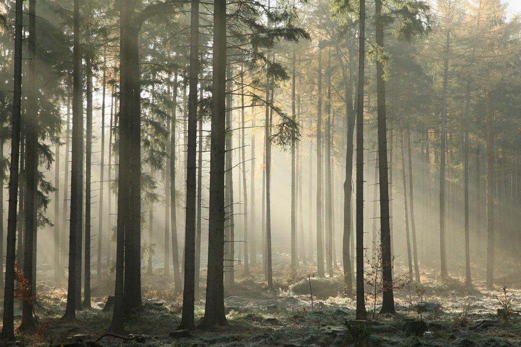 «Люди среди деревьев»: Зачем читать дебютный роман Ханьи Янагихары. Изображение № 1.