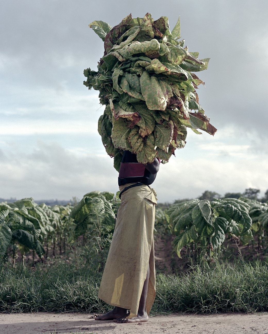 «Местность»: Обезличенный труд африканских крестьян. Изображение № 3.