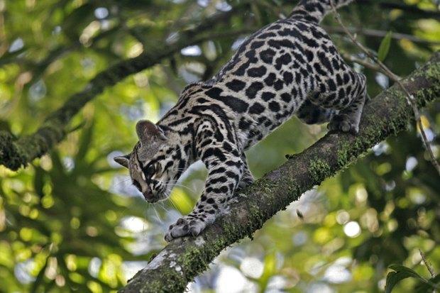 Как учёные находят новых животных: 8 недавно открытых видов. Изображение № 5.