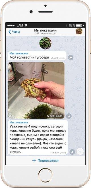На кого подписаться: Телеграм гигантской лягушки «Мы поквакали». Изображение № 1.