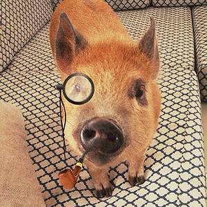 11 классных  звериных аккаунтов  в Instagram. Изображение № 33.