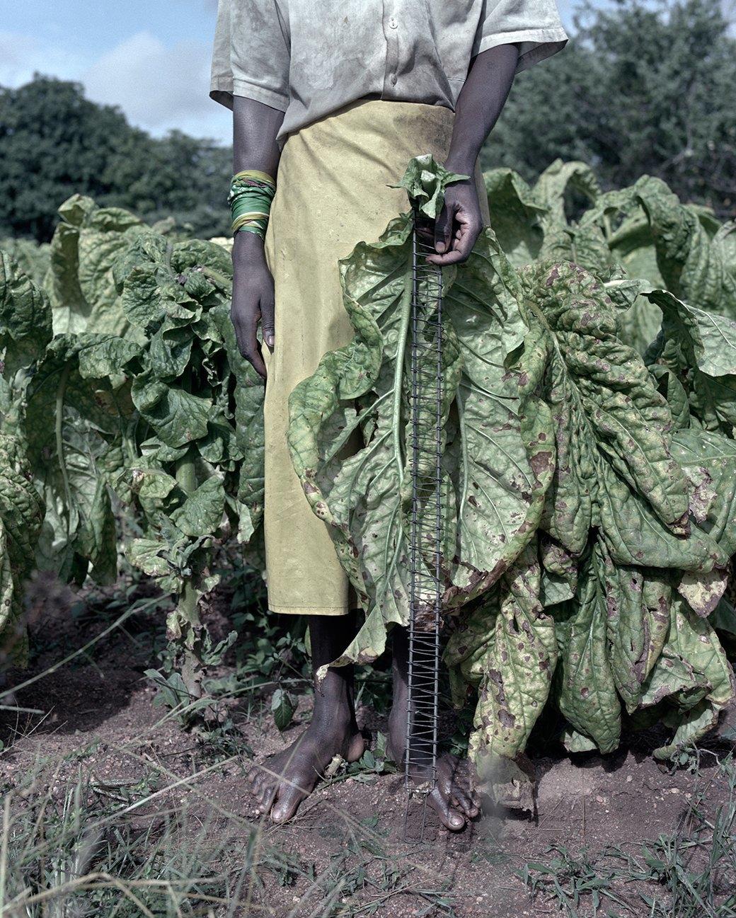 «Местность»: Обезличенный труд африканских крестьян. Изображение № 15.