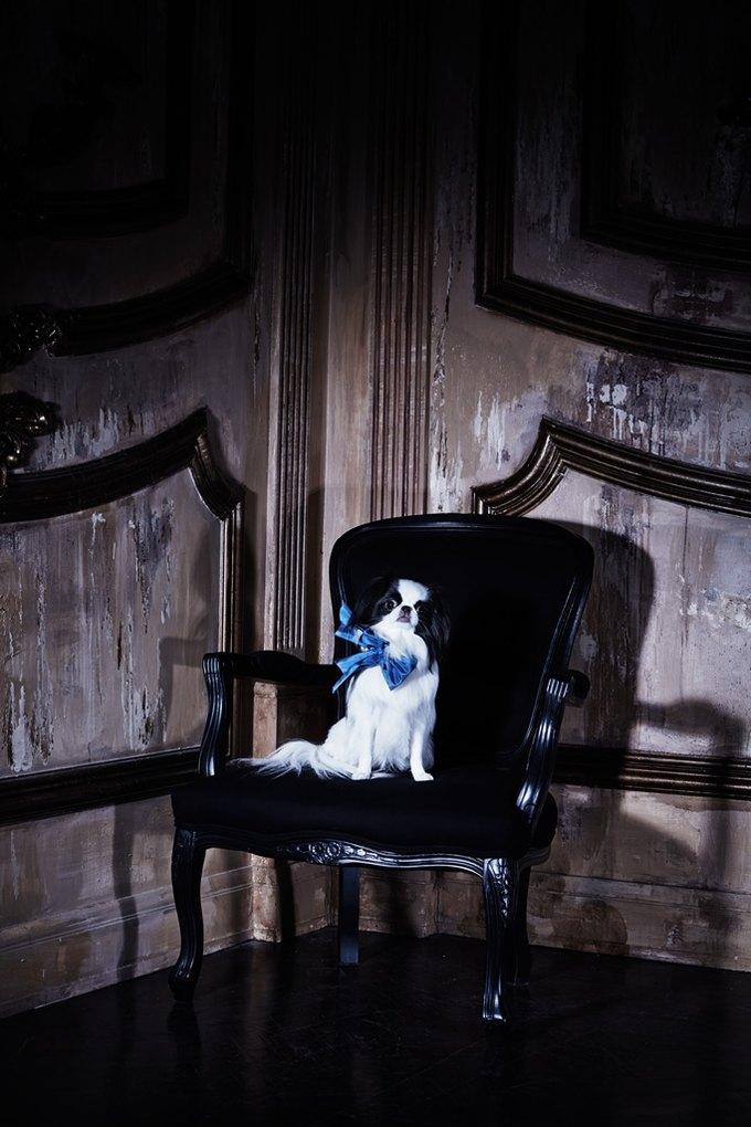 Саша Лусс с собачкой в новом лукбуке Bohemique. Изображение № 5.
