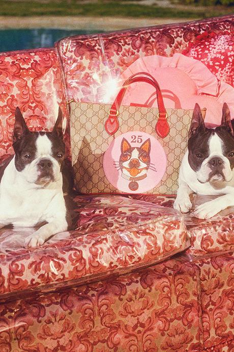 Новая кампания Gucci с умилительными псами. Изображение № 3.