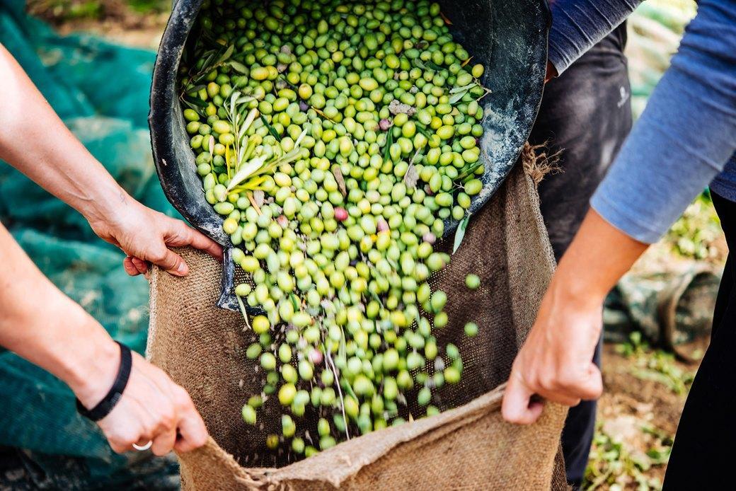 Осень в Италии:  Гастротуризм и сбор  олив на Сицилии. Изображение № 15.