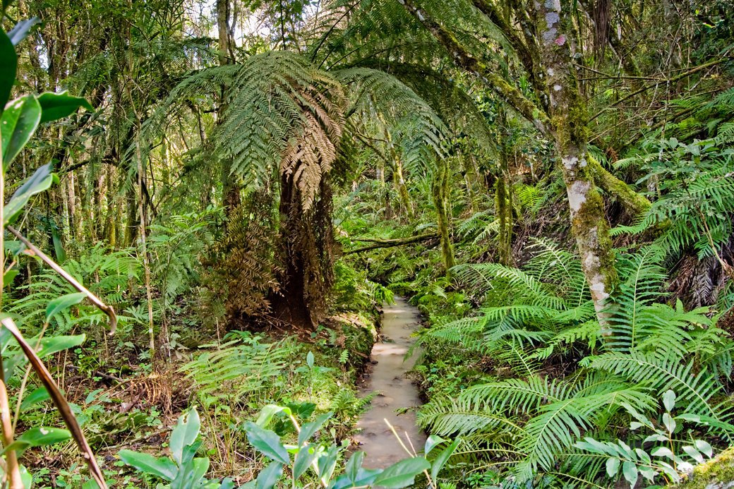 Как я прокладывала пешеходную тропу  в лесах Бразилии. Изображение № 3.
