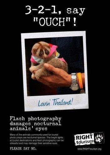 Запустилась кампания против селфи с дикими животными. Изображение № 2.