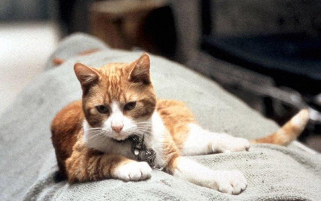 Наглая морда: Лучшие рыжие  коты в кино . Изображение № 8.
