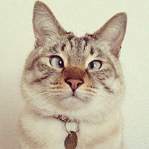 11 классных  звериных аккаунтов  в Instagram. Изображение № 17.