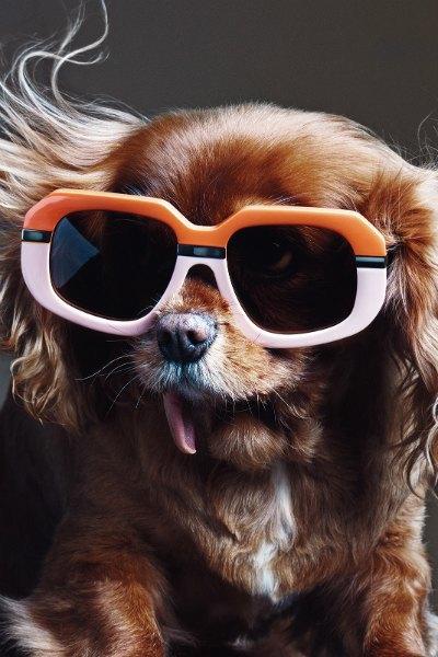 В лукбуке Karen Walker снялась собака — звезда Instagram. Изображение № 3.