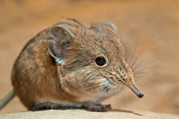Как учёные находят новых животных: 8 недавно открытых видов. Изображение № 7.