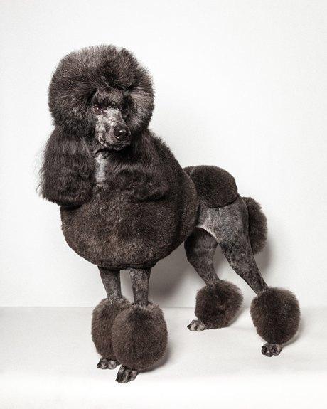 «Стриженые»: Собаки как арт-объект. Изображение № 12.