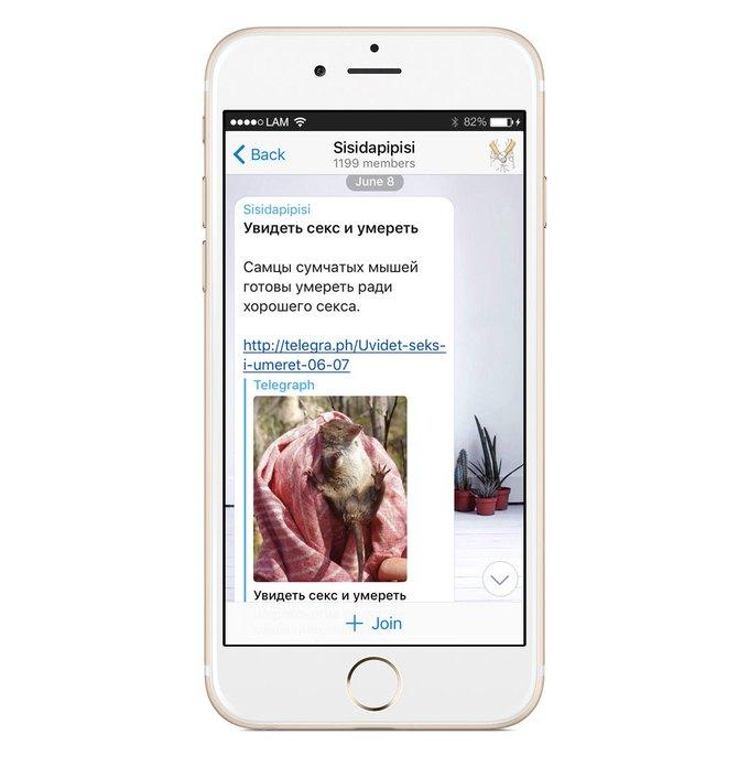 На кого подписаться: Telegram-канал о сексе в мире животных. Изображение № 5.