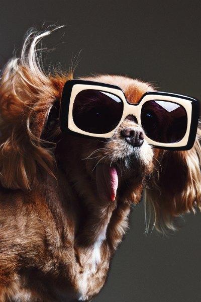 В лукбуке Karen Walker снялась собака — звезда Instagram. Изображение № 8.