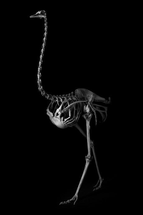 Белое на чёрном: Скелеты животных в фотоальбоме «Evolution» . Изображение № 4.