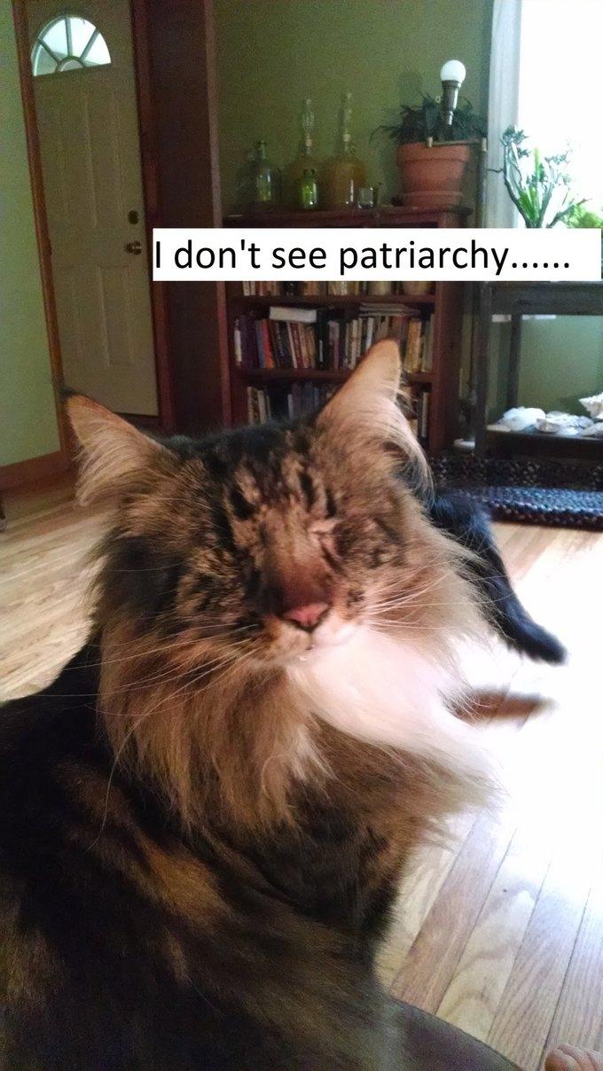 В новом тумблоге кошки борются с феминизмом  (на самом деле нет). Изображение № 10.