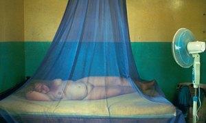 Ульрих Зайдль: «Мы живем в обществе диктатуры красоты». Изображение № 7.