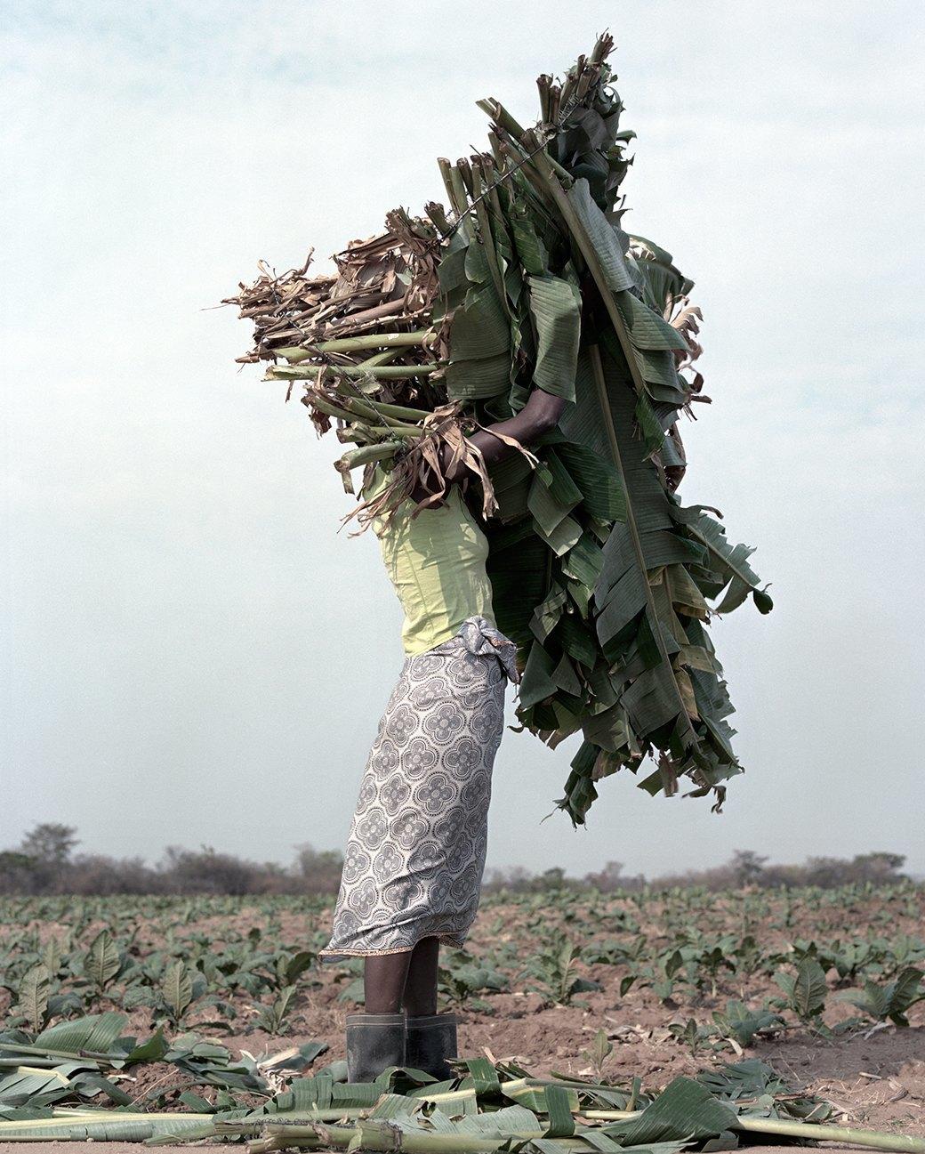 «Местность»: Обезличенный труд африканских крестьян. Изображение № 10.