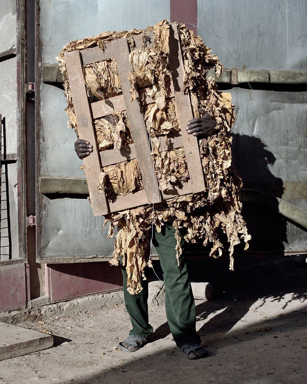 «Местность»: Обезличенный труд африканских крестьян. Изображение № 17.