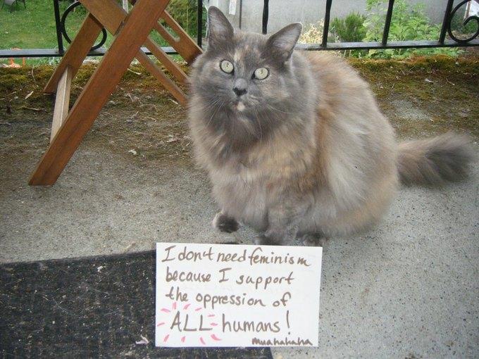 В новом тумблоге кошки борются с феминизмом  (на самом деле нет). Изображение № 4.