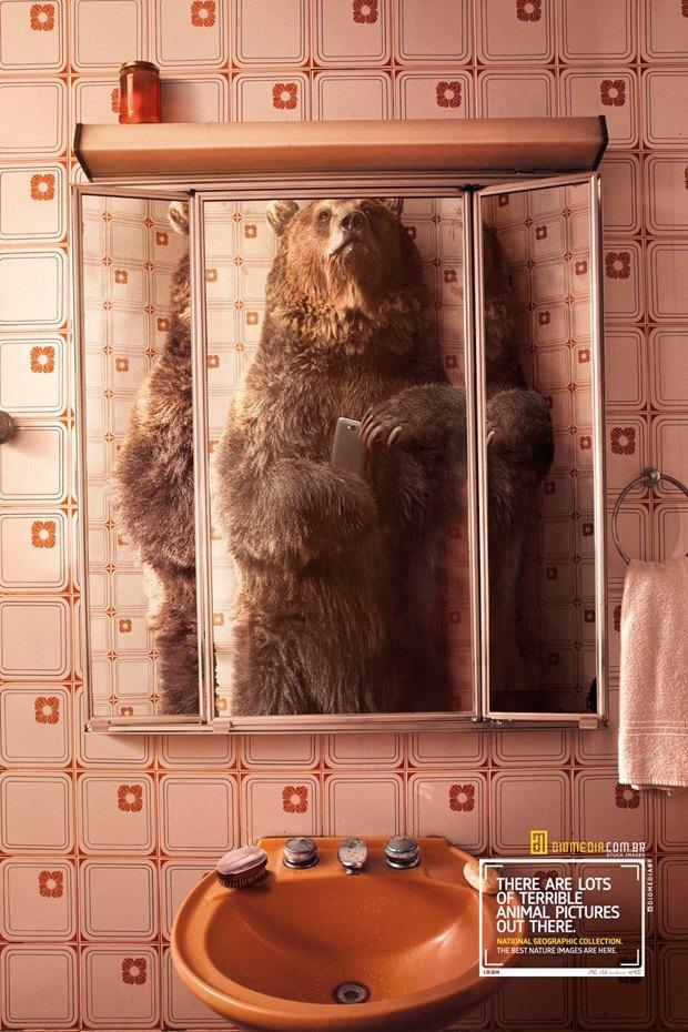Картинки по запросу Животные делают селфи в новой рекламе National Geographic