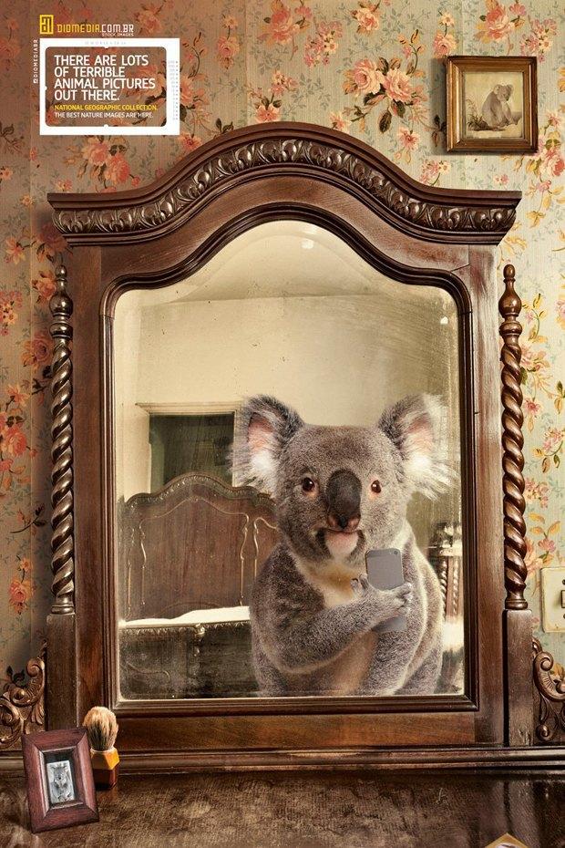 Животные делают селфи в новой рекламе National Geographic. Изображение № 3.