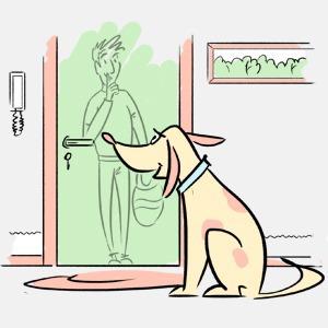 Откуда домашние животные заранее знают, что к вам придут гости?