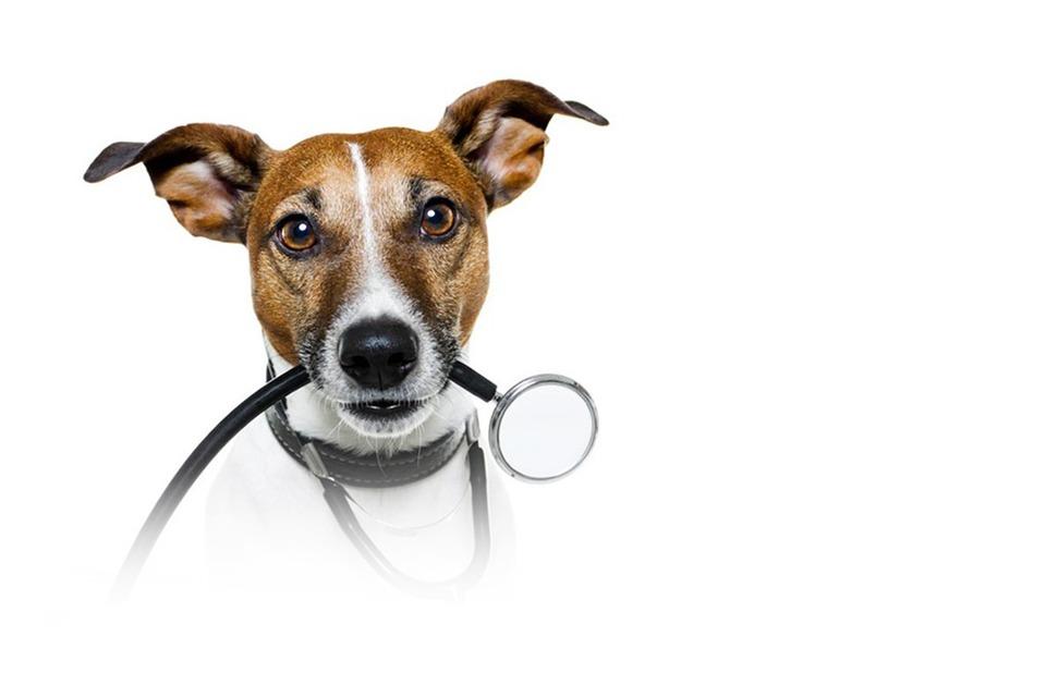 Ветеринар — Будущее на The Village