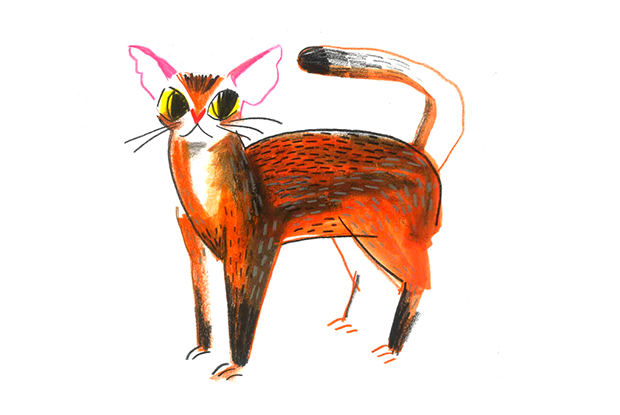 Сколько стоят породистые кошки — Тест на The Village