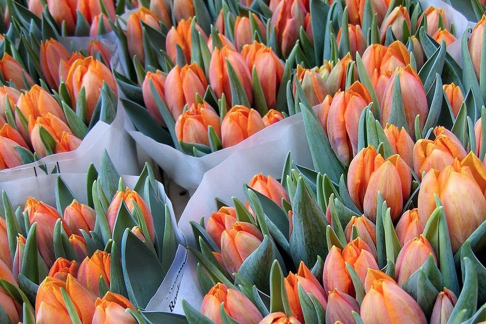 Потоки цветов: Как Florist.ru делает глобальный бизнес на розах и герберах — Сделал сам на The Village
