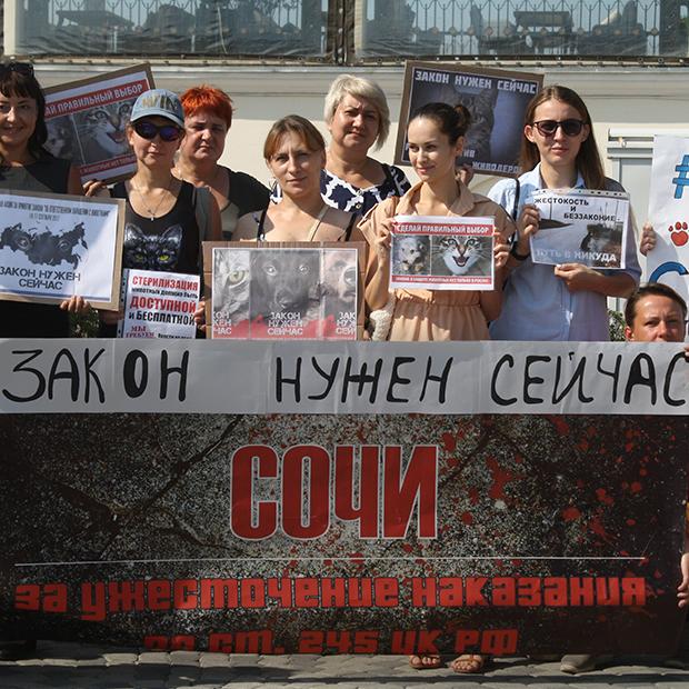 Как в Сочи проходила акция «Закон нужен сейчас» — Фоторепортаж на The Village