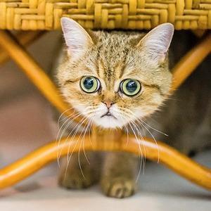 «Ресторанный день», бои учёных, ночь «Друзей», выставка котов и ещё 17 событий