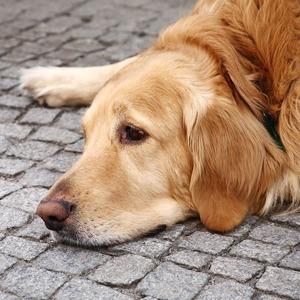 Личный опыт: Что делать, если вы нашли собаку — Личный опыт на The Village